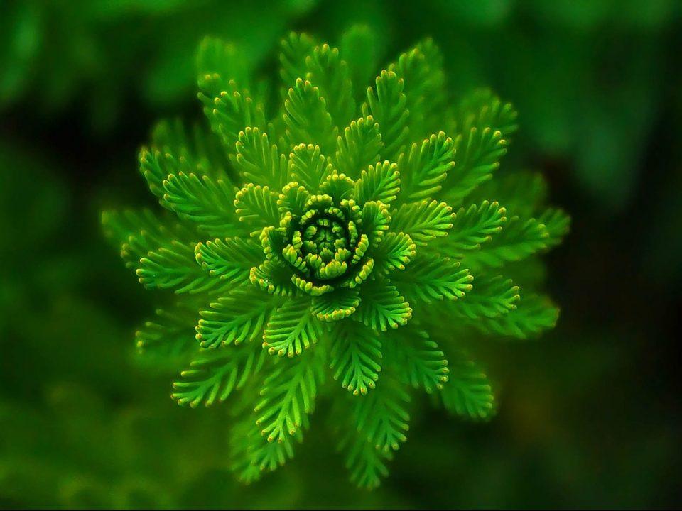 abstract green plant e1558446421391